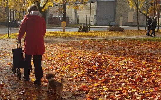 hundpromenad med rollator i stan